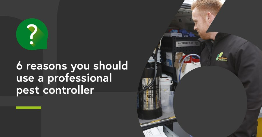6 reasons you should use a professional pest controller